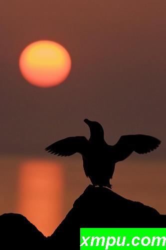 拉佐比尔在夕阳