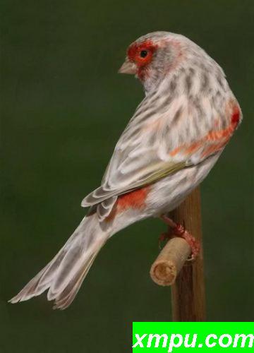 玛瑙胭脂玉鸟