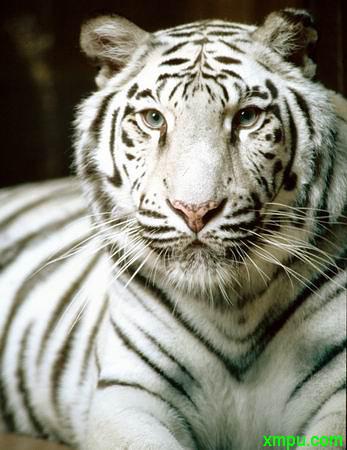 濒临绝种的动物资料大全