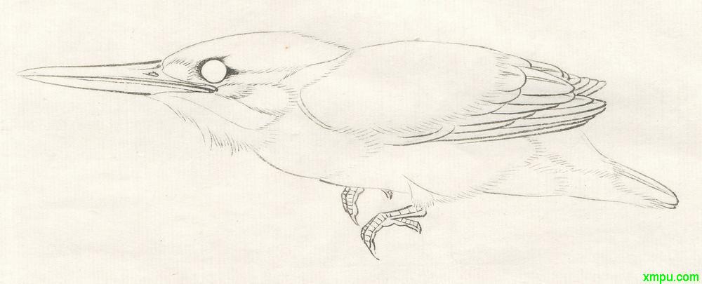 李晓明工笔画——翠鸟的画法