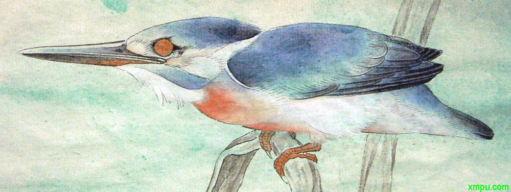 李晓明工笔画——翠鸟的画法 pic.uchis.com 宽1000x376高