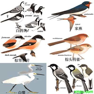 上海常见的十种鸟类(图)