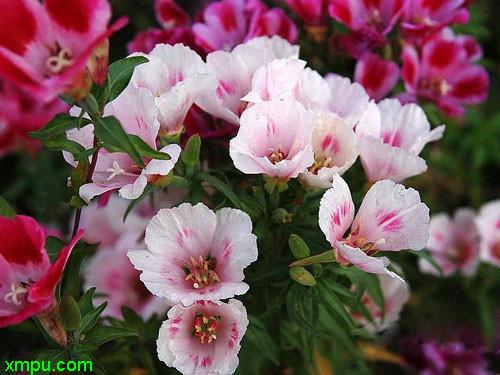 春花の画像 p1_8