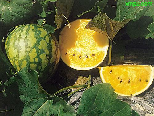 植物名称及图片