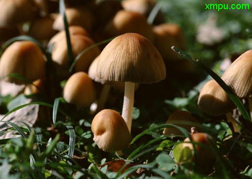蘑菇的种类_蘑菇图片_蘑菇种植_蘑菇种类-动植物