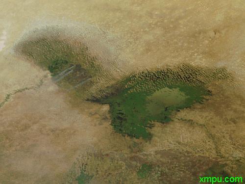 颤藻细胞手绘图