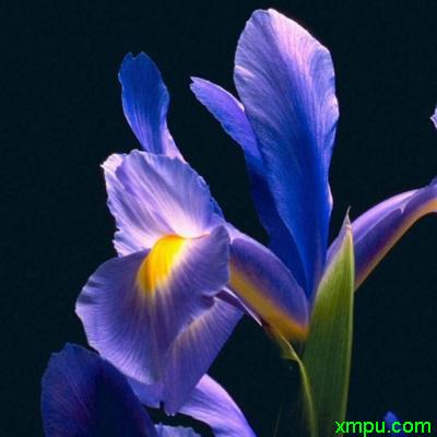 冬季蔬菜大全_紫罗兰图片_紫罗兰种植_紫罗兰种类-动植物