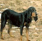 黑褐猎浣熊犬