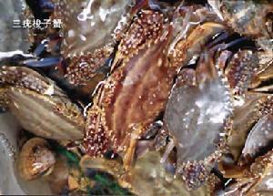 三疣梭子蟹